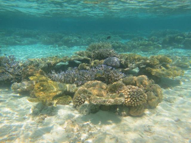 Quelques photos de mes dernières vacances (Maldives) 295778IMG2960
