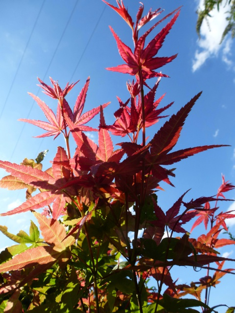 l'automne arrive... - Page 2 298649tuxpicom1408644732