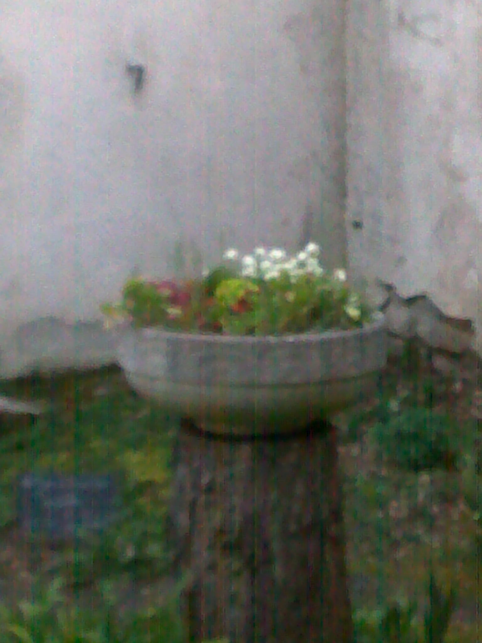 quelques photos de mon jardin 29881614042013139