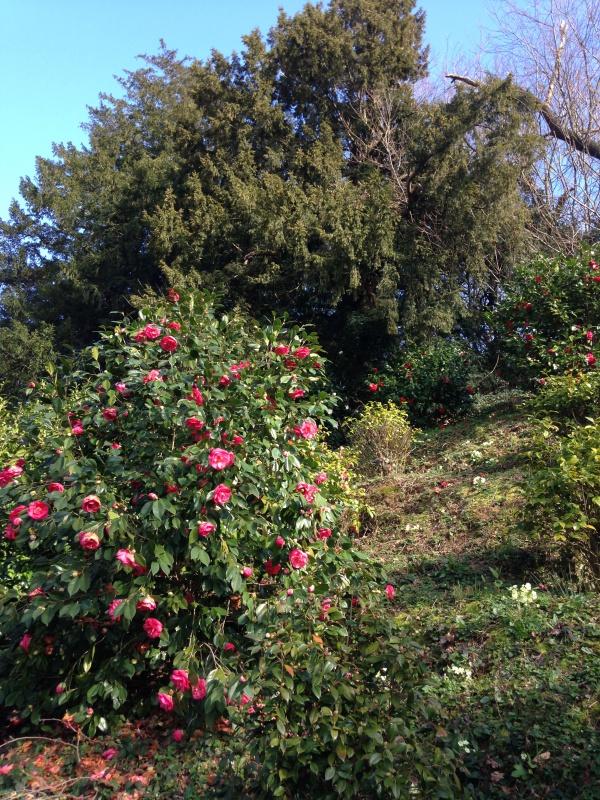 (40) Plantarium et chemin de ronde - Gaujacq 305927IMG0524