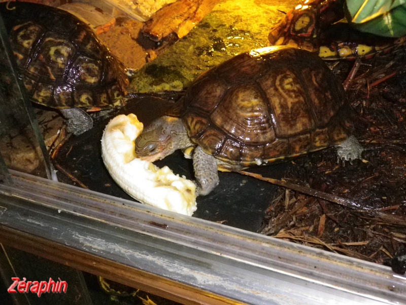 Aménagement d'un aqua-terrarium pour espèce semi-aquatique 30685107janvier20128