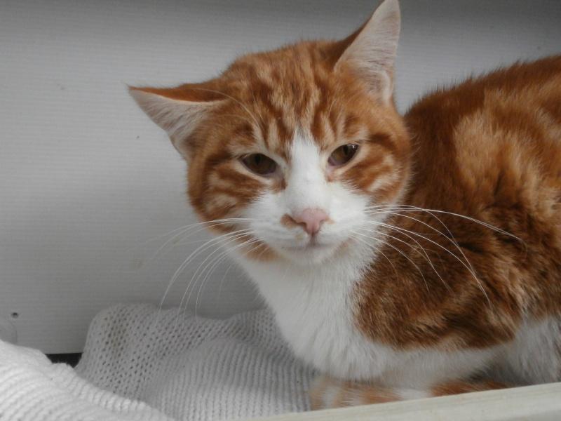 GATO (chaton mâle roux et blanc) 308637P1212099