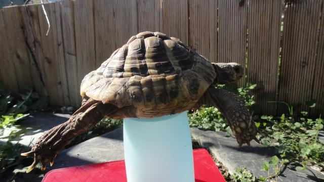 conseils pour aider une tortue-terra  317375platonsept20143