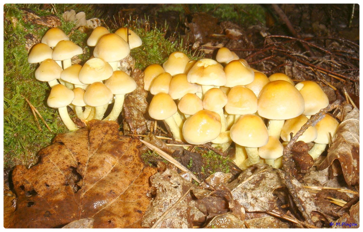 [fil ouvert] les champignons 323950DSC011196