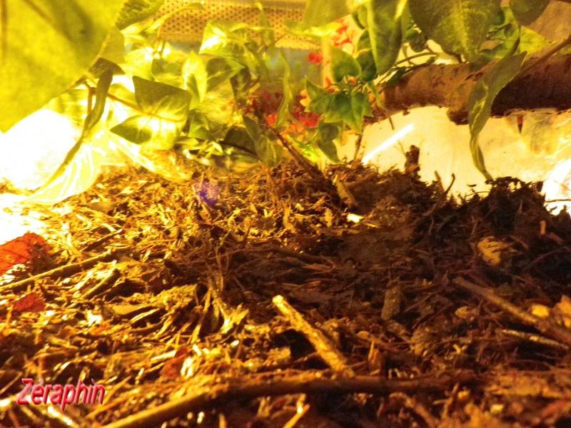 Aménagement d'un aqua-terrarium pour espèce semi-aquatique 33858704janvier201222