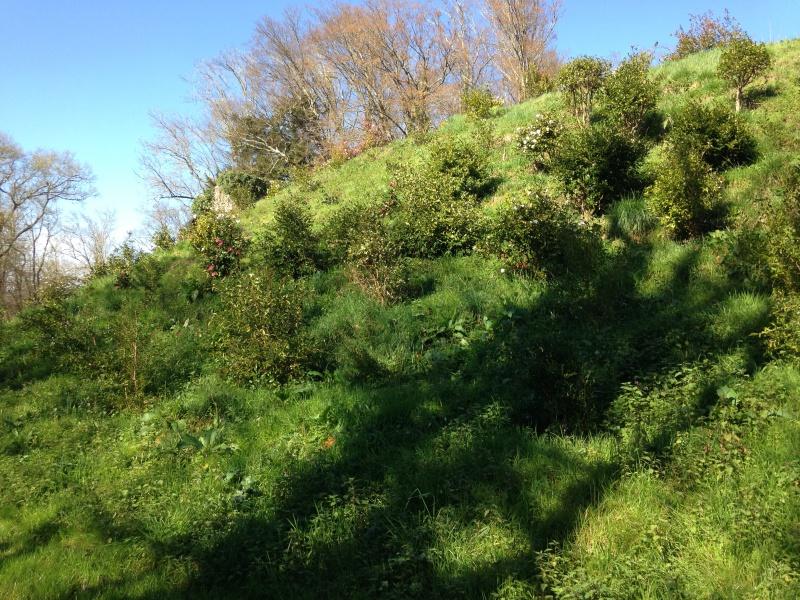 (40) Plantarium et chemin de ronde - Gaujacq 341731IMG0485
