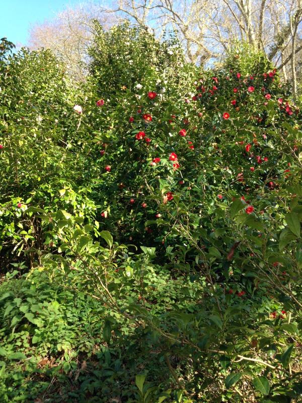 (40) Plantarium et chemin de ronde - Gaujacq 346463IMG0512
