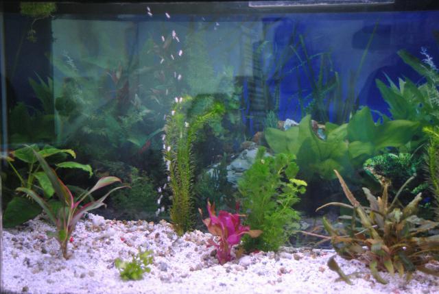 le nouvel aquarium de ma fille  354267DSC4665