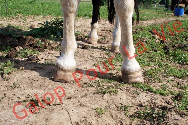 LOONY -  ONC poney né en 2001 - Adopté en juin 2011 par Carole 354498IMG4831