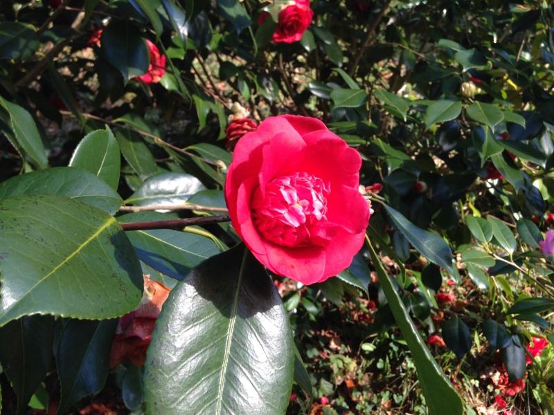 (40) Plantarium et chemin de ronde - Gaujacq 356942IMG0521