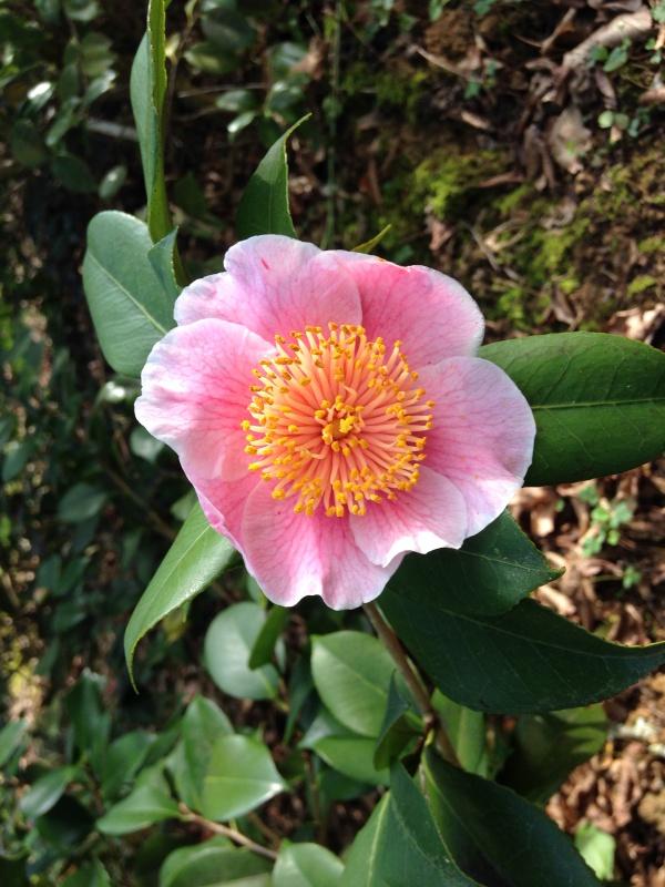 (40) Plantarium et chemin de ronde - Gaujacq 357260IMG0531