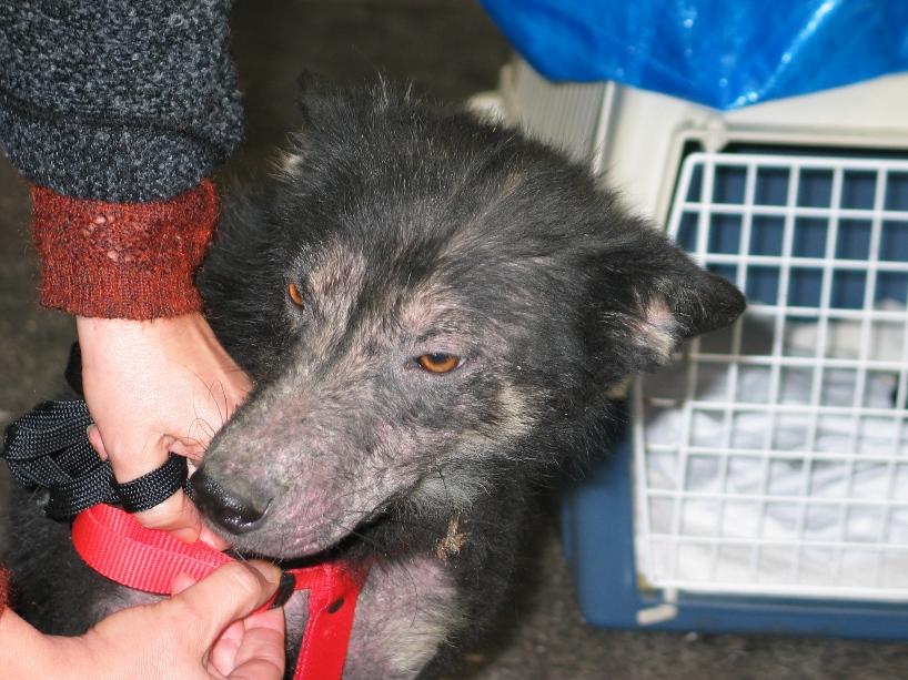 > Mika, un amour de petite chienne, née en mai 2011 - Adoptée 372027957