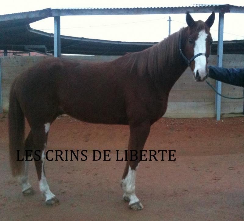 Tito, TF et Perrine (Janvier 2012/2020) 375870IMG05941