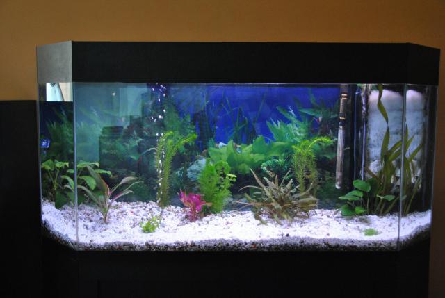 le nouvel aquarium de ma fille  379597DSC4667