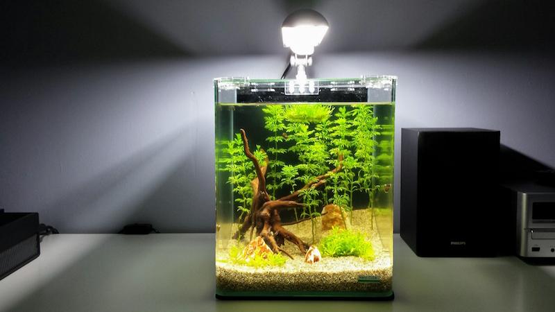 20 litres Naturel / Low tech / Sable et éclairage seulement 381339Jour004