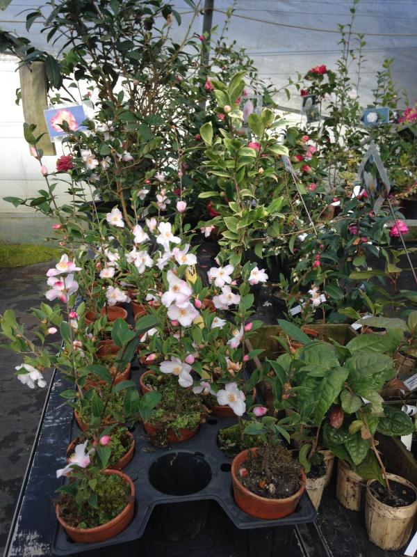 (40) Plantarium et chemin de ronde - Gaujacq 383744IMG0539