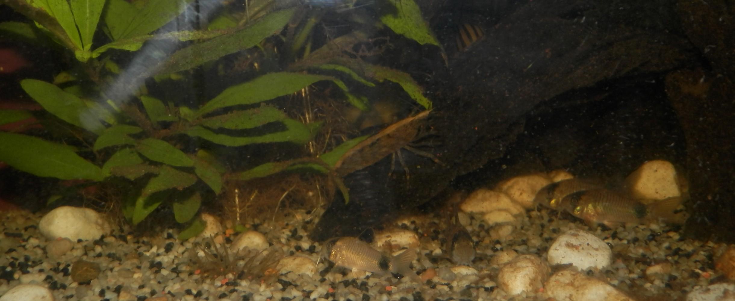 [Présentation] Tous les trous mènent aux crevettes Bambou 3879705910