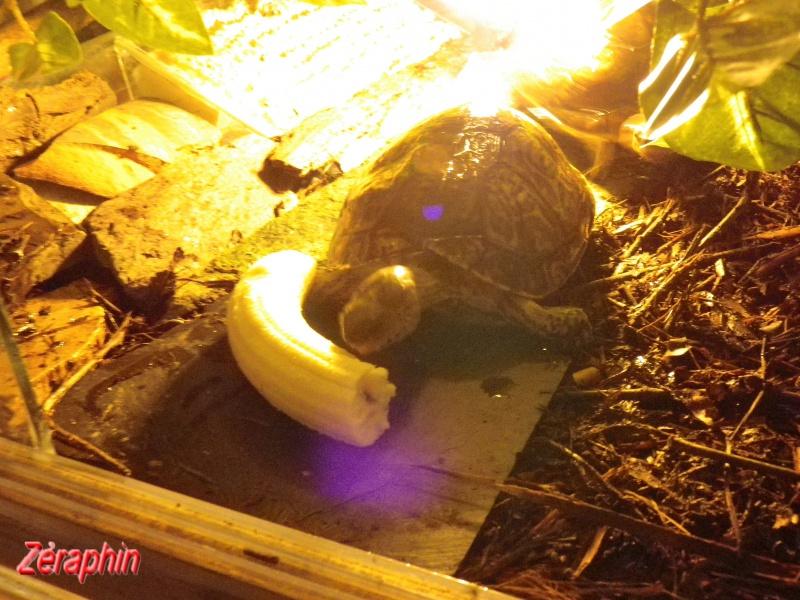 Aménagement d'un aqua-terrarium pour espèce semi-aquatique 39429407janvier20126