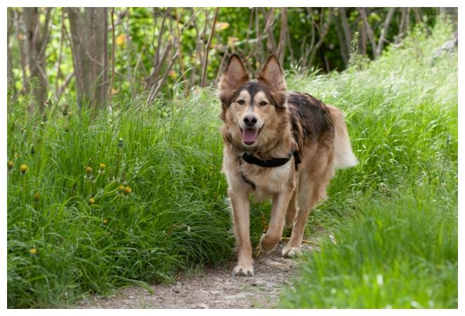 Nos loups grandissent, postez nous vos photos - Page 9 394449DSC7985640x480