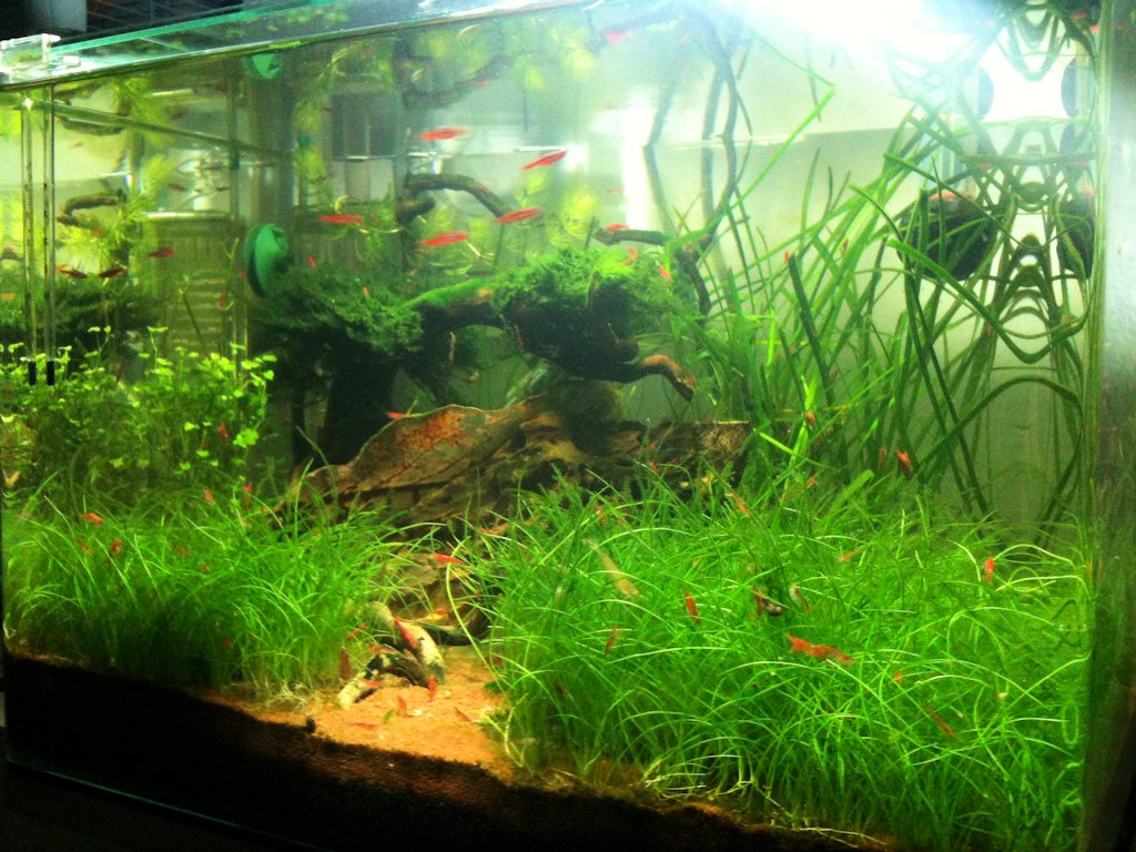 Mon Scaper's Tank 50L Aquascaping - Page 3 396595IMG0909