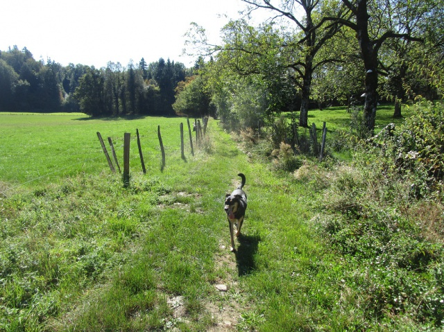 Kami, chien de randonnée - Page 21 399561IMG4825