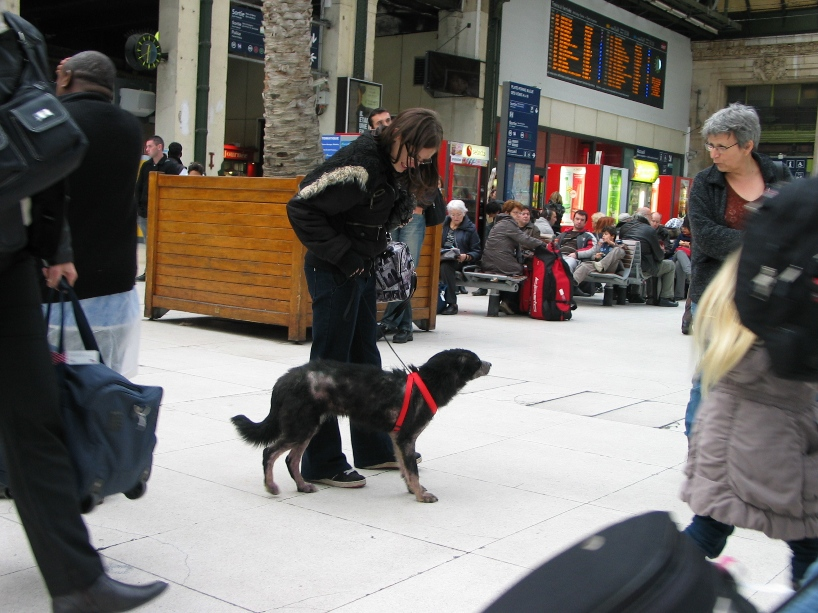 > Mika, un amour de petite chienne, née en mai 2011 - Adoptée 4036015410