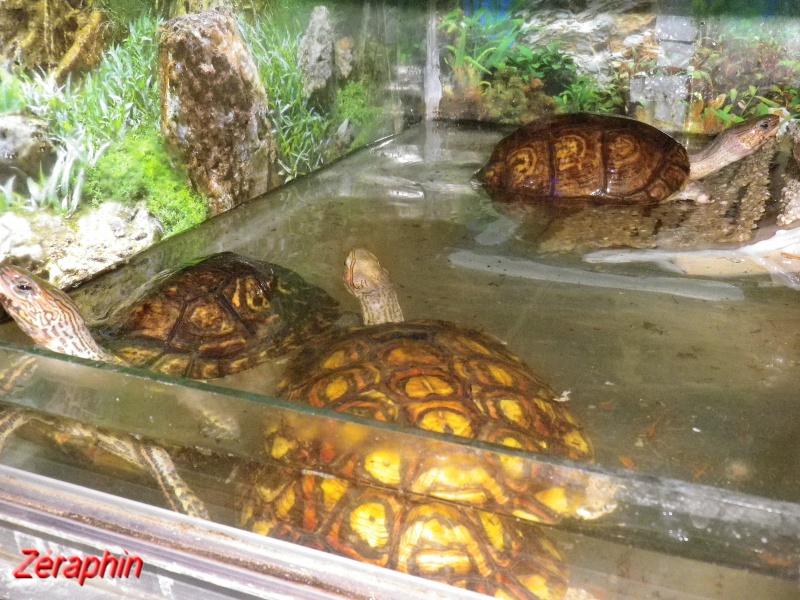Aménagement d'un aqua-terrarium pour espèce semi-aquatique 40852607janvier20125