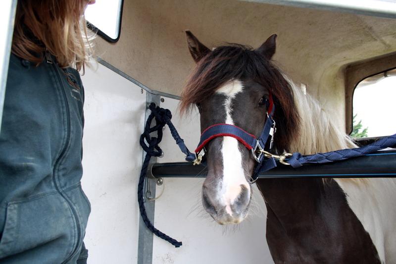 LOONY -  ONC poney né en 2001 - Adopté en juin 2011 par Carole 420068Looetsanouvellefamille5