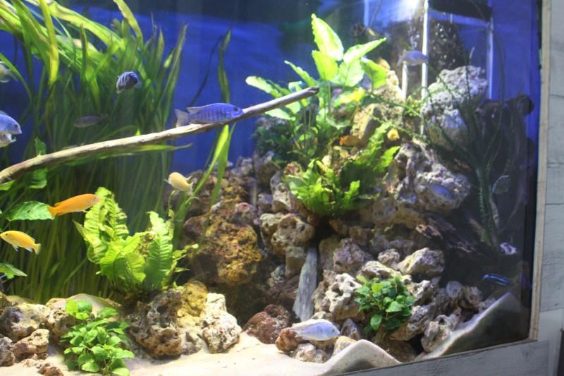 aquarium de 2000L en bois - Page 2 425247IMG0014