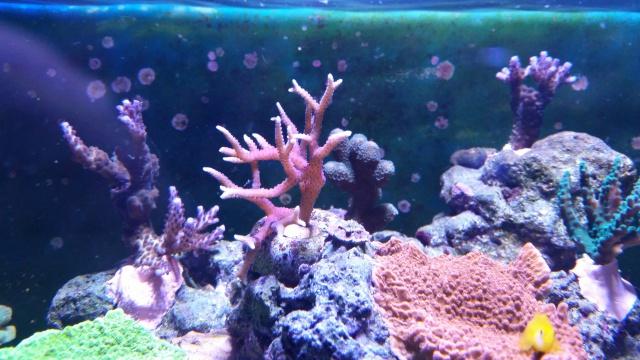 Mon premier aquarium eau de mer - Page 3 42584520141222211258