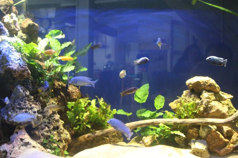 aquarium de 2000L en bois - Page 2 427836IMG0009