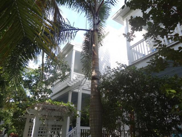 First Visit WDW/Miami/Key West halloween 2013 - Page 7 442092DSC04079