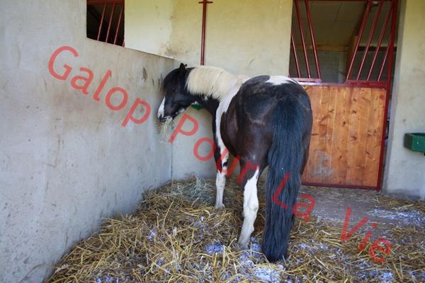 LOONY -  ONC poney né en 2001 - Adopté en juin 2011 par Carole 446072IMG4957