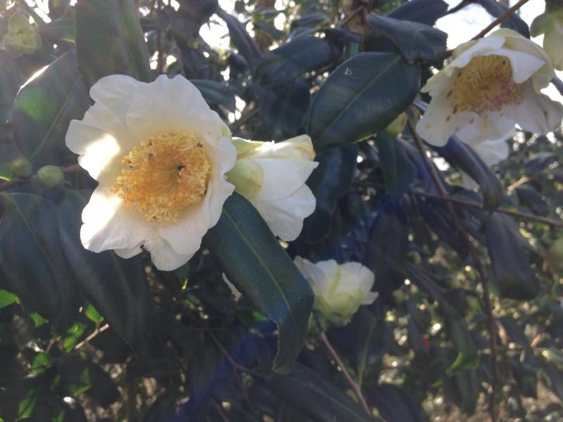 (40) Plantarium et chemin de ronde - Gaujacq 454261IMG0491
