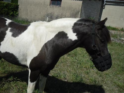 LOONY -  ONC poney né en 2001 - Adopté en juin 2011 par Carole 462529Loo3