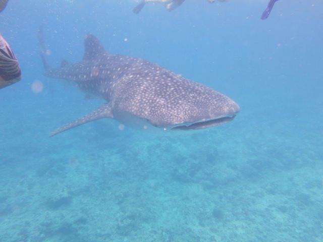 Quelques photos de mes dernières vacances (Maldives) 465905IMG3285