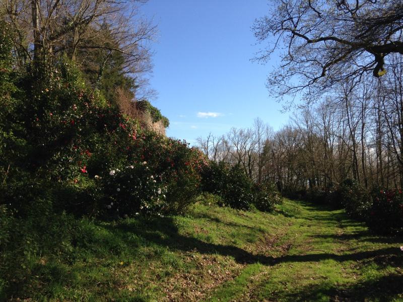 (40) Plantarium et chemin de ronde - Gaujacq 469119IMG0514