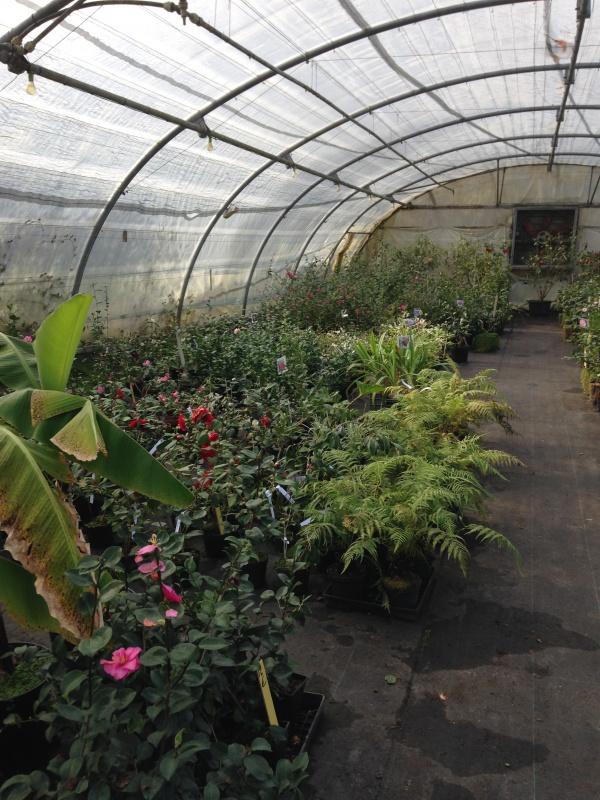 (40) Plantarium et chemin de ronde - Gaujacq 470356IMG0540