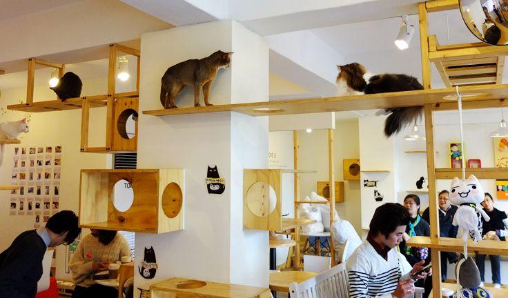 Neko-cafés : les bars a chats 470664chattt