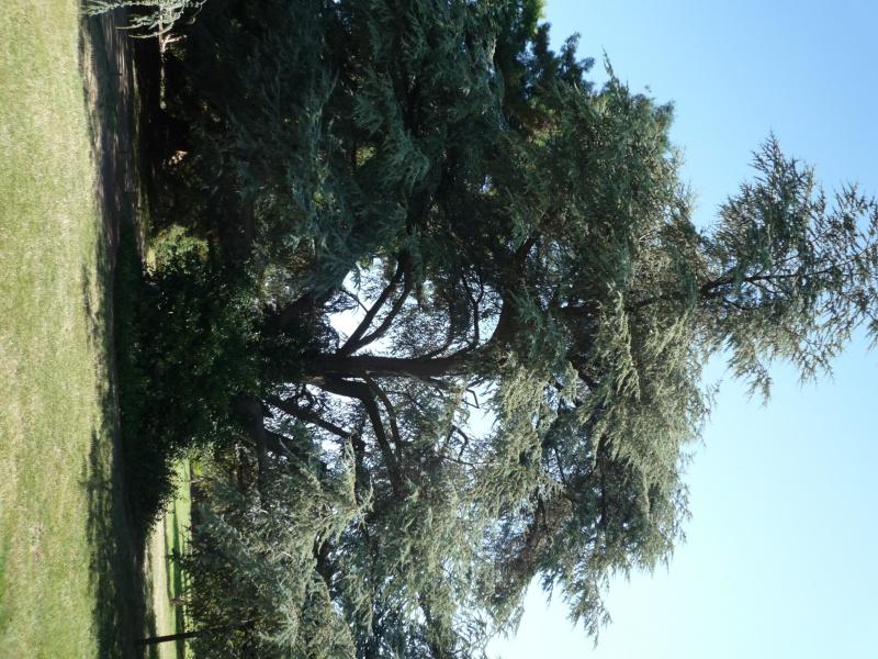 arboretum 470862P1070858