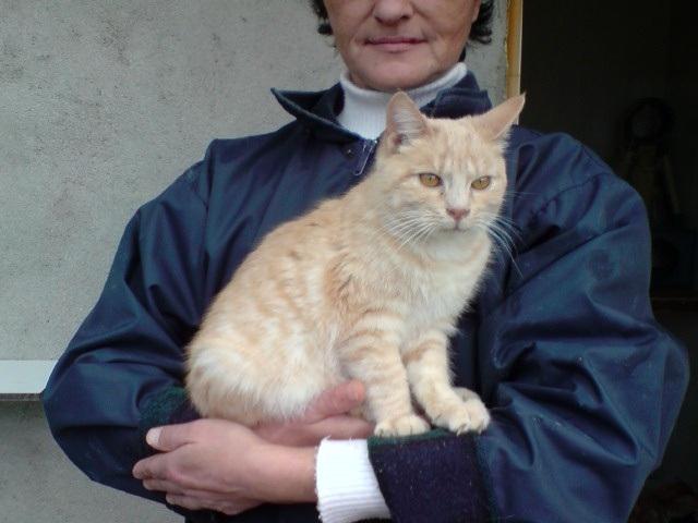 BANANIA  (chaton roux) 473161E