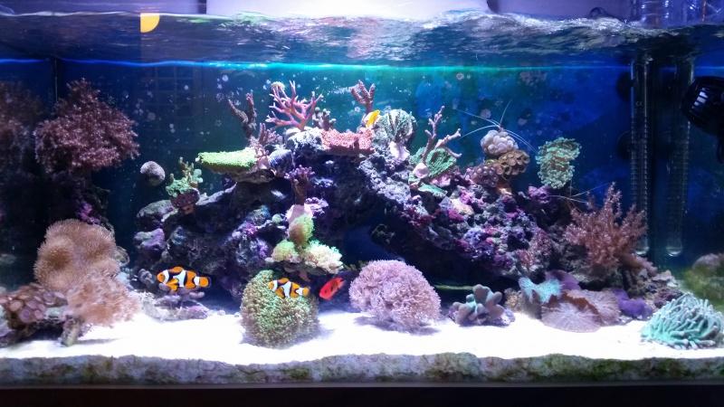 Mon premier aquarium eau de mer - Page 3 47981920150109175604