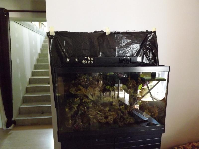 Astra47's Reef >Rsm250 noir - Page 2 487880DSCF1896