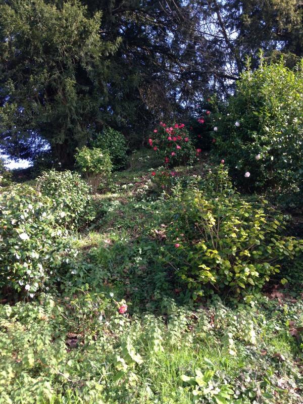 (40) Plantarium et chemin de ronde - Gaujacq 489878IMG0526