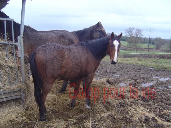 VICTORIO - PS né en 2009 - adopté en janvier 2011 par Margaux 493050bb4