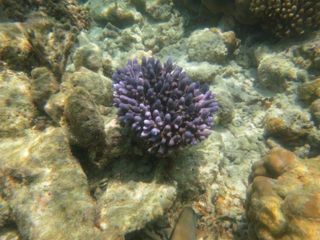 Quelques photos de mes dernières vacances (Maldives) 495126IMG3726