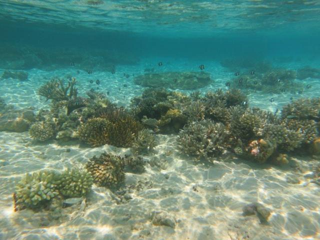 Quelques photos de mes dernières vacances (Maldives) 504721IMG2983