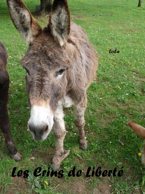 (Dept19) LOLA (dcd) et CHARLENE, ânesses, réservées par Indye !!!! (Juin 2013) - Page 6 511508Lola3
