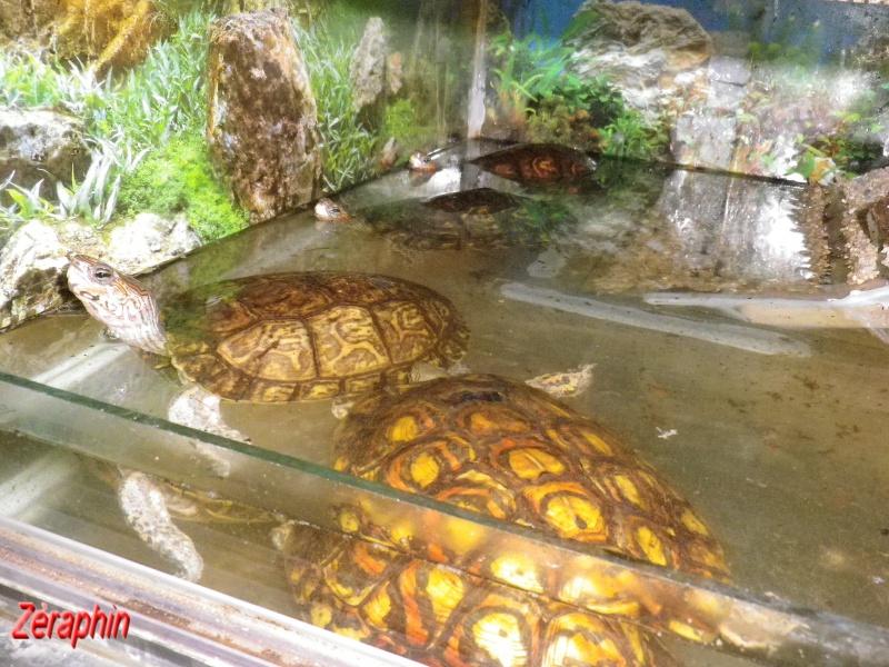 Aménagement d'un aqua-terrarium pour espèce semi-aquatique 51331307janvier20123