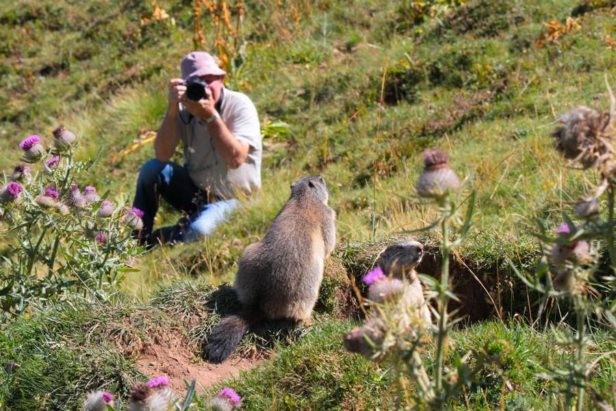 Le photographe de Dame Marmotte  516355MichelmarmottesLD